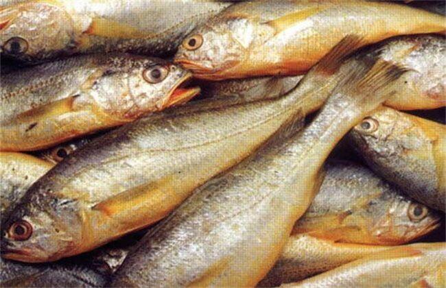 【小黄鱼加盟】哪里可以采购黄花鱼?多少钱一斤